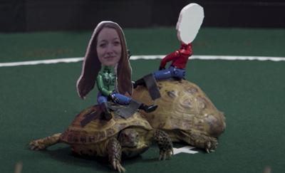 Sydney Fulcher's turtle.jpg