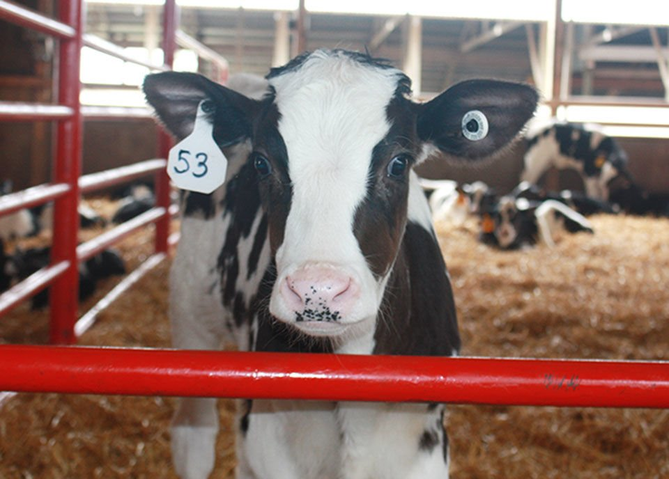 Hundreds expected at the 2019 Stearns County Breakfast on the Farm
