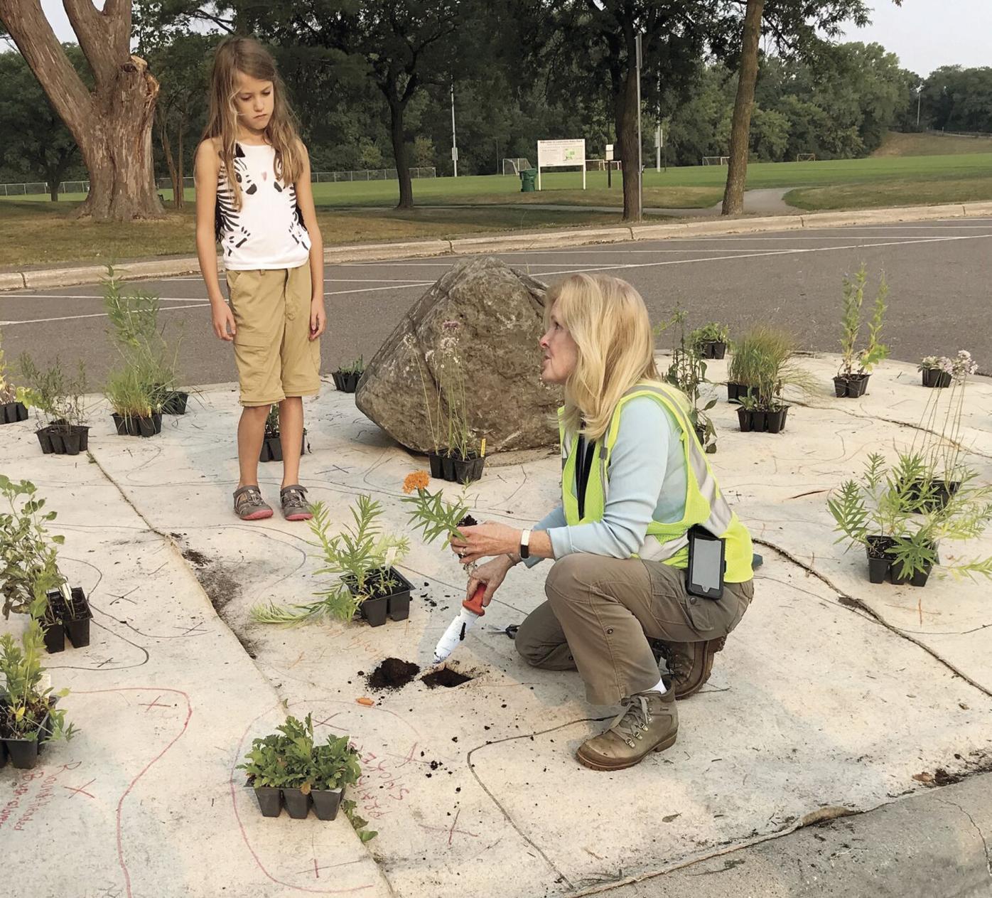 Bringing back native plants at Louisiana Oaks Park in St. Louis Park - 1