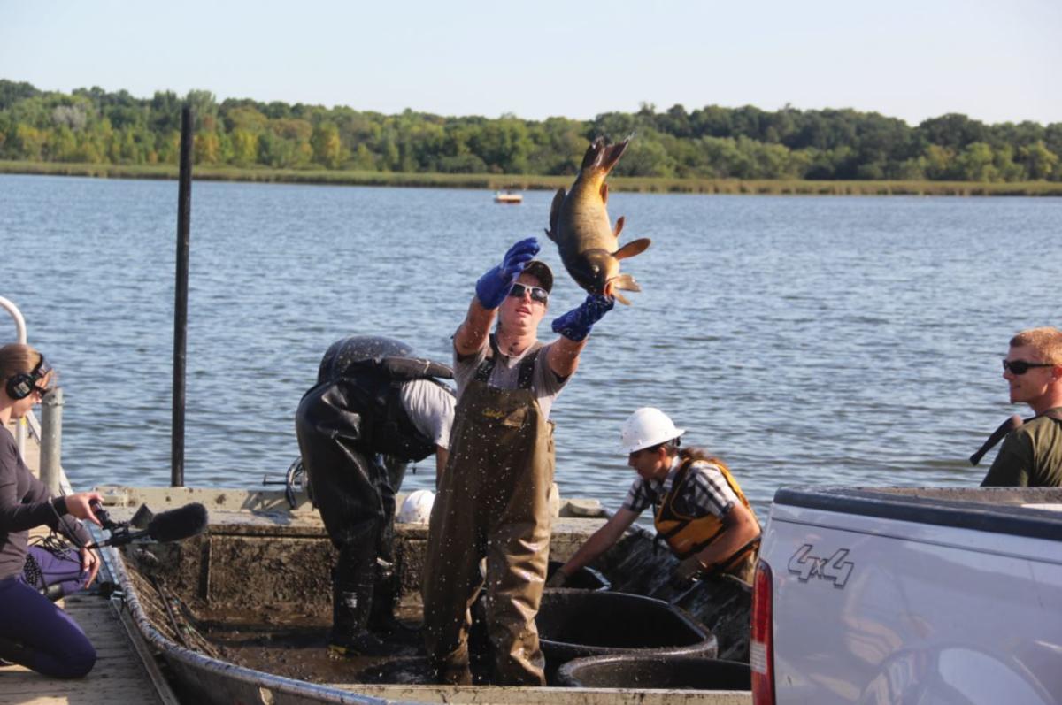 Invasive carp removal process begins