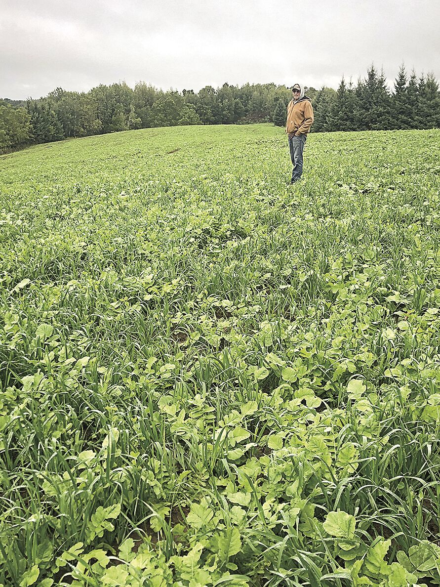 Ledebuhr cover crop