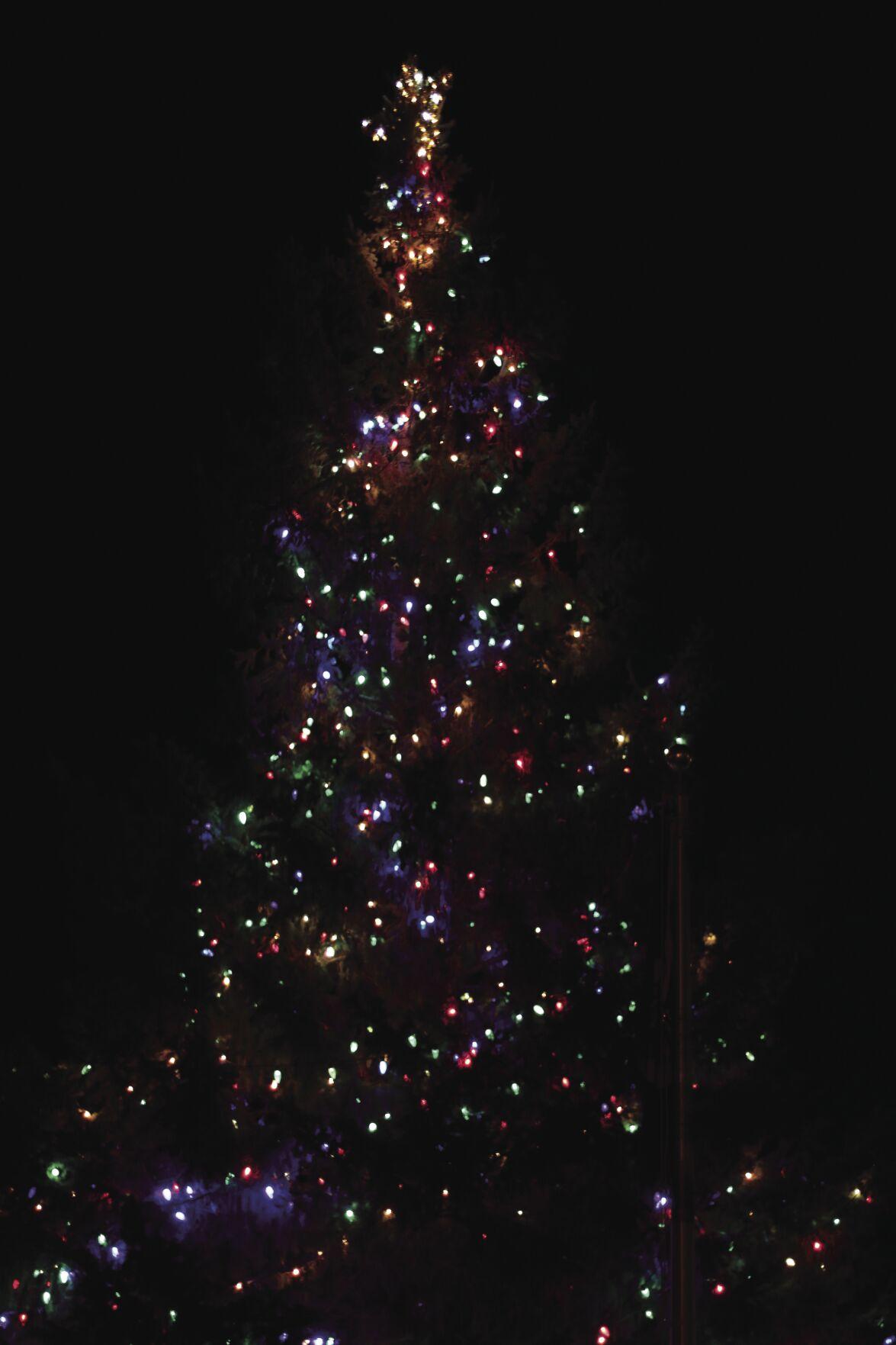 North Branch Christmas tree