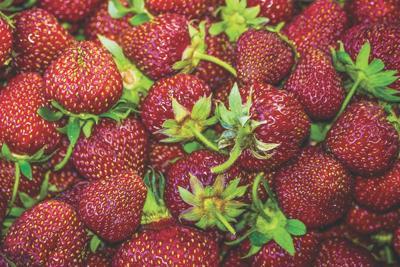 strawberries mt
