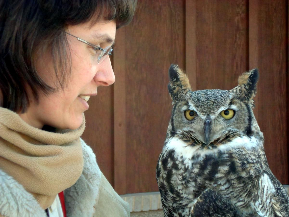 16th Annual International Festival Of Owls A Family Fun Event Caledonia Hometownsource Com