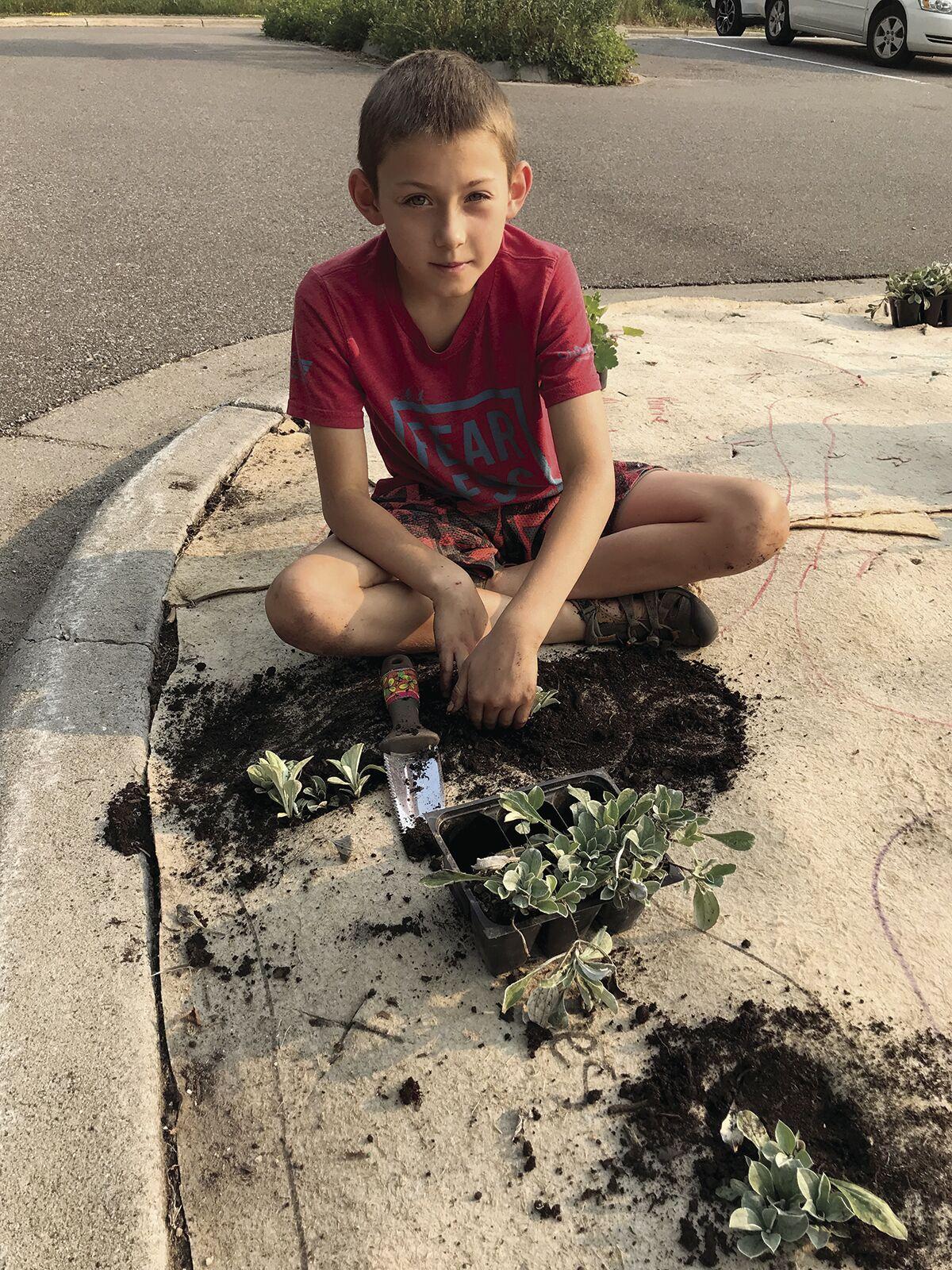 Bringing back native plants at Louisiana Oaks Park in St. Louis Park - 4