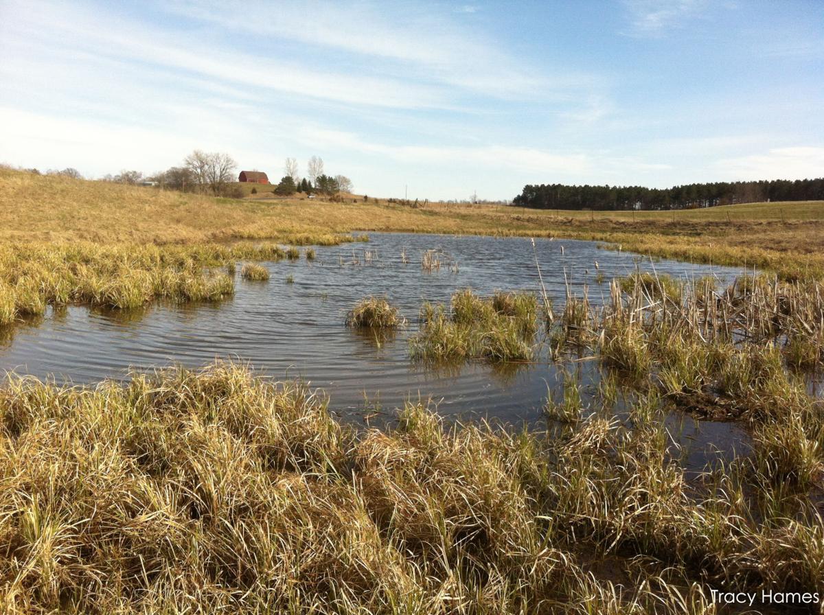 Pothole wetland