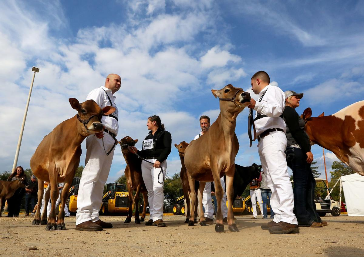 World Dairy Expo 2