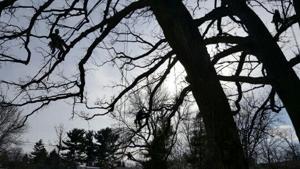 Shadow climber.jpg