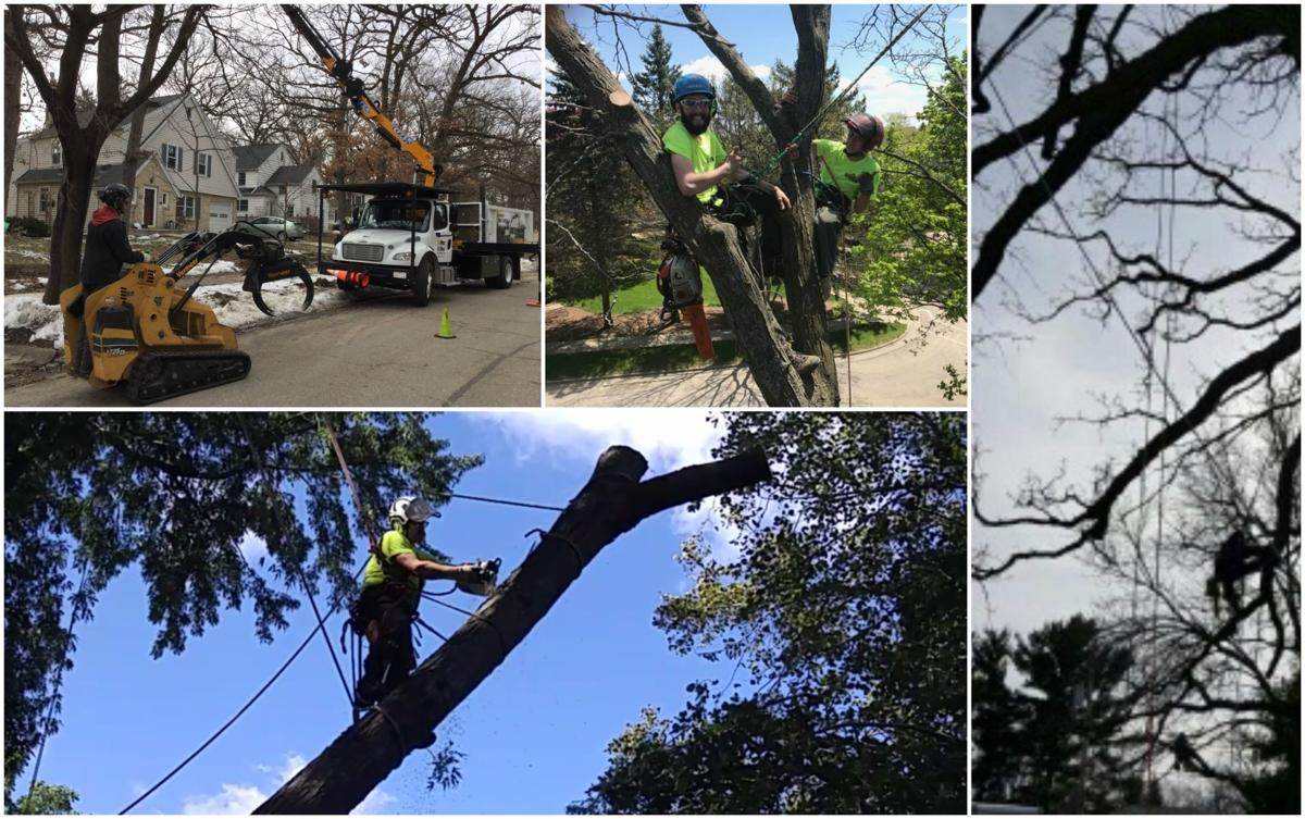 tree services in madison