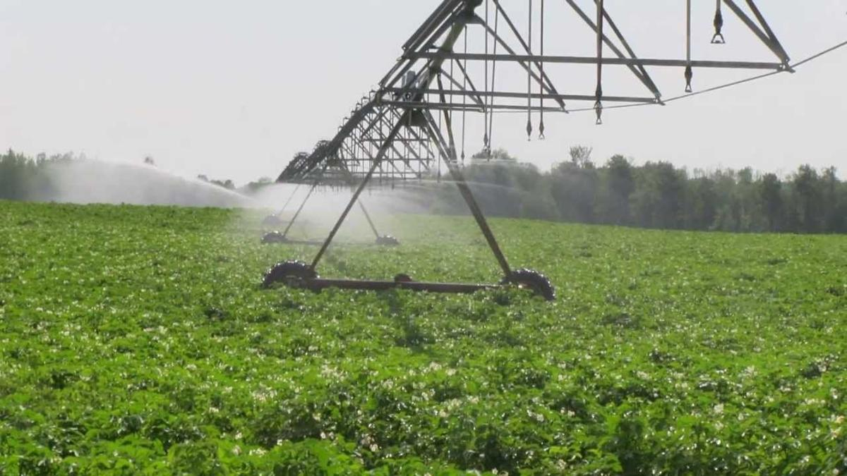 Irrigation in potato field