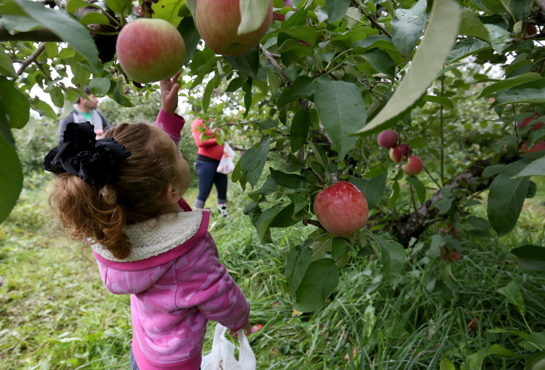 DOOR CREEK ORCHARD & Photos: A fall day at Door Creek Orchard | Local News | host ... Pezcame.Com