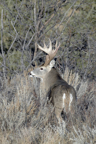 Outdoors: History of the deer hunt in Wisconsin | Outdoors | host.madison.com