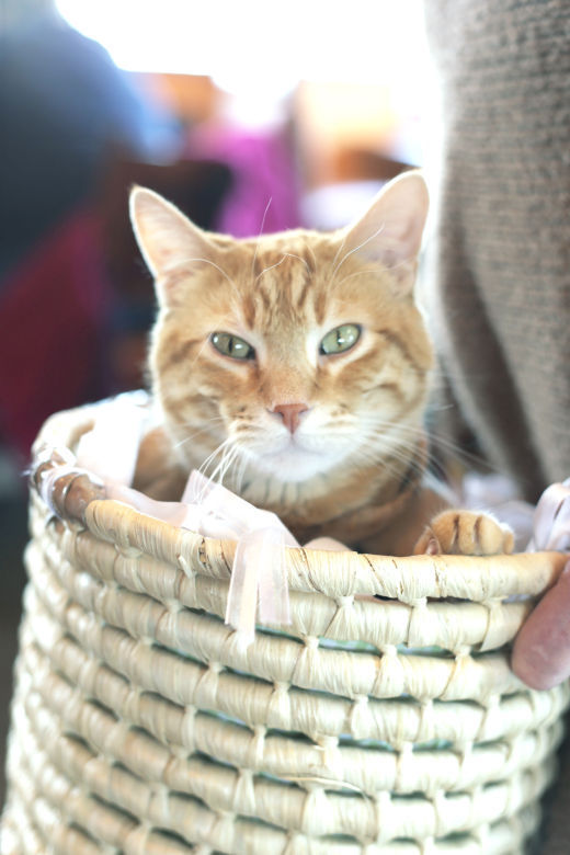 Cat in the basket (copy)