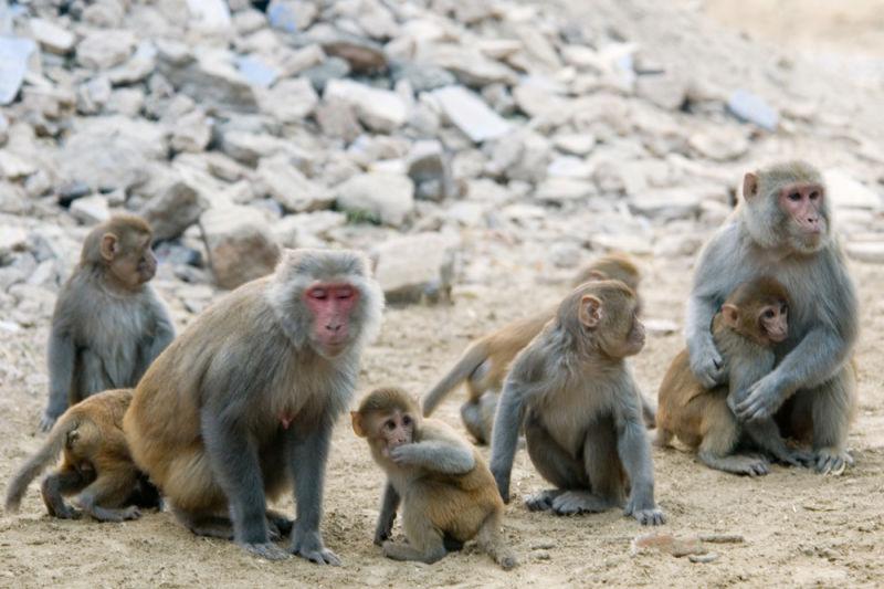 monkey group (copy)