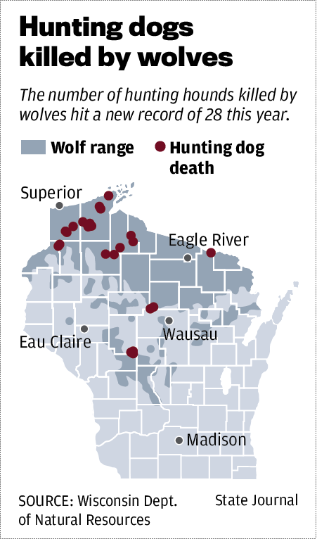 Hunting dogs killed by wolves
