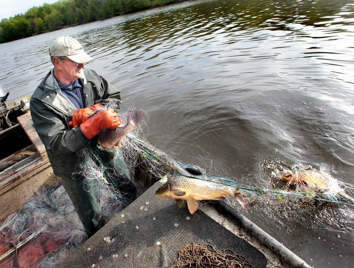 For commercial fishermen mississippi river is getting for Mississippi river fish
