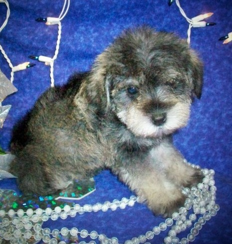 Puppy Nov. 18