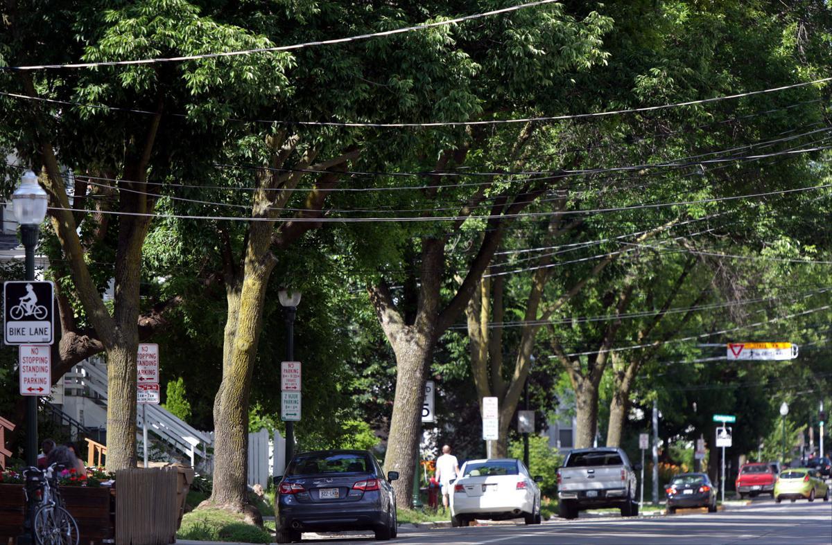 Trees (copy)