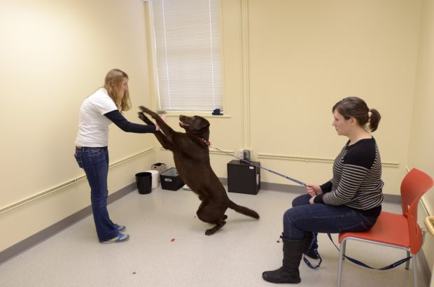 Researchers at Yale want to know what your dog is thinking