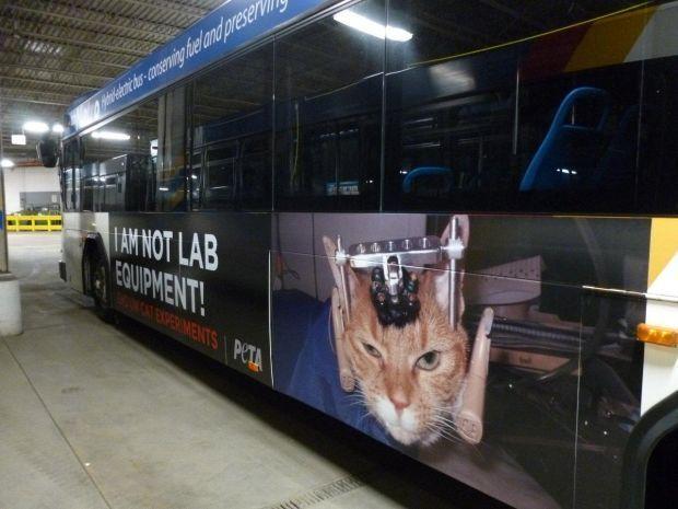 PETA bus ad (copy) (copy)