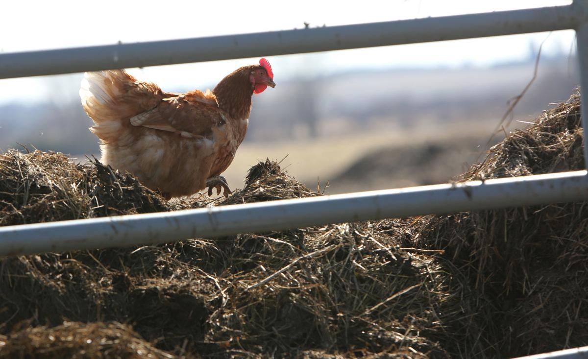 FOUNTAIN PRAIRIE EDUCATION FARM