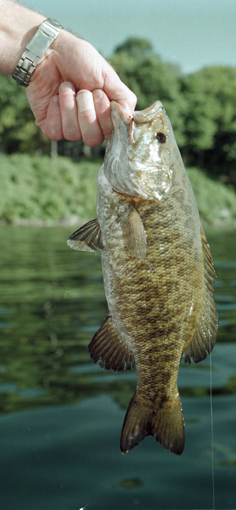 Gary Engberg: Wisconsin River place to be for smallmouth bass in the ...