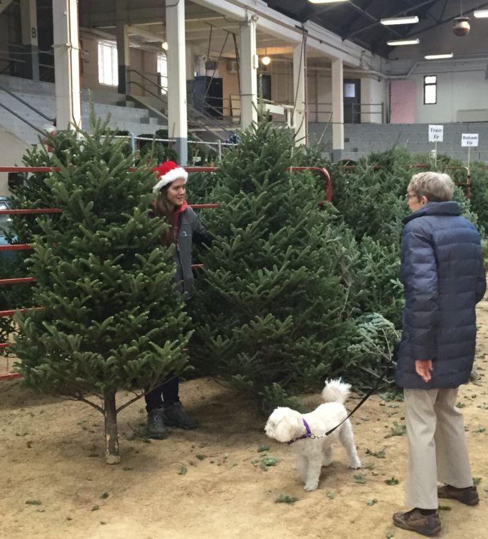 uw xmas tree sale - Christmas Tree For Sale