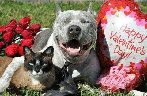 Valentine Pet Party EARTHWISE PET SUPPLY