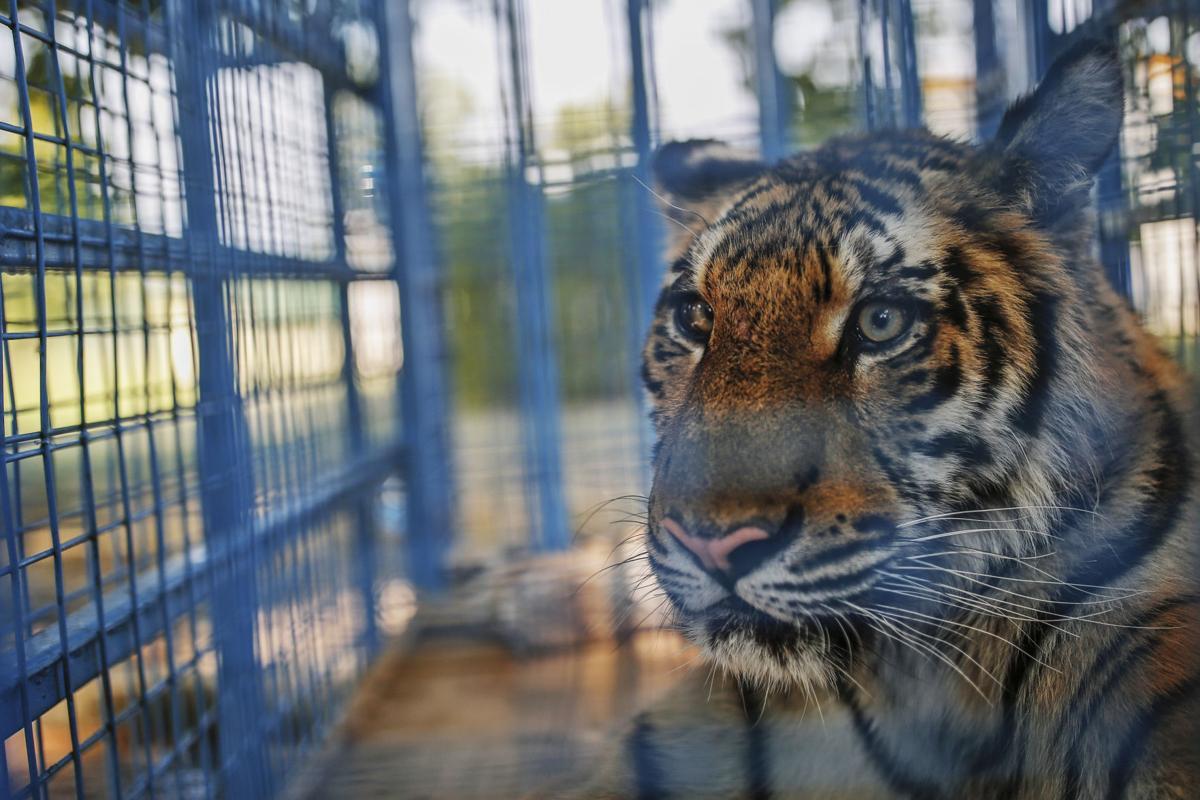 Turkey Syria Zoo Photo Gallery
