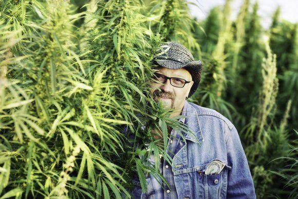 4 Marijuana Polls With 1 Overwhelming Consensus: Legalize