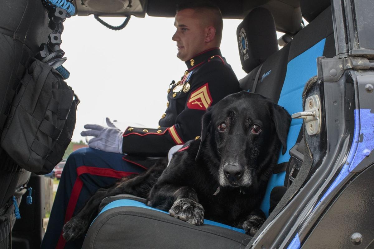 Military Dog Farewell