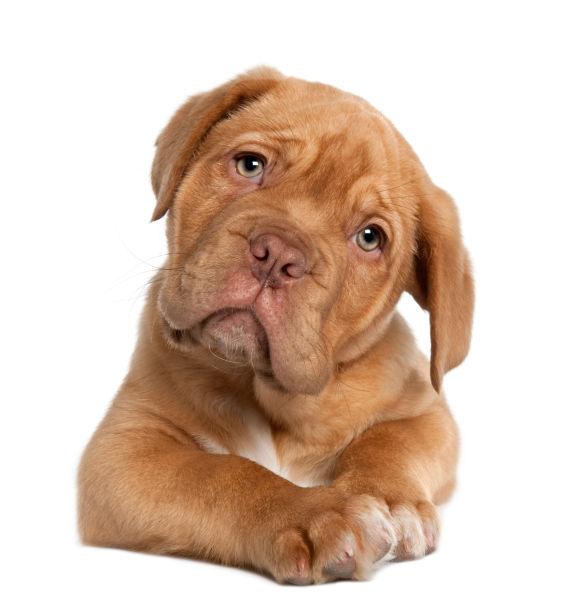 Pet Paws Awhile Grooming LLC