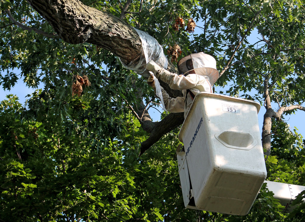 City saves a hive, gifts to the Bee Association