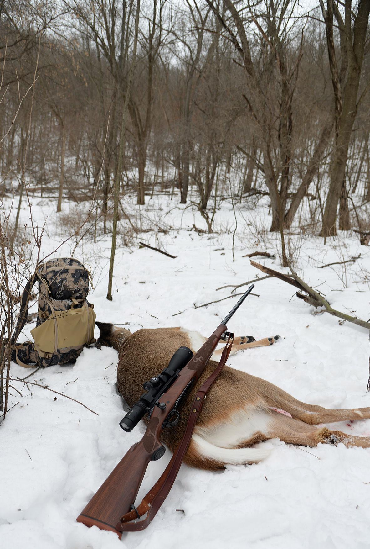 Deer and CWD