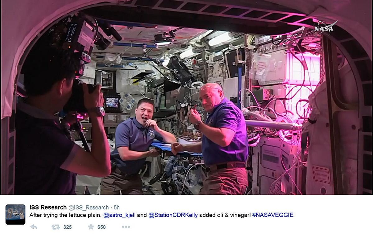 Space Station Lettuce (copy)