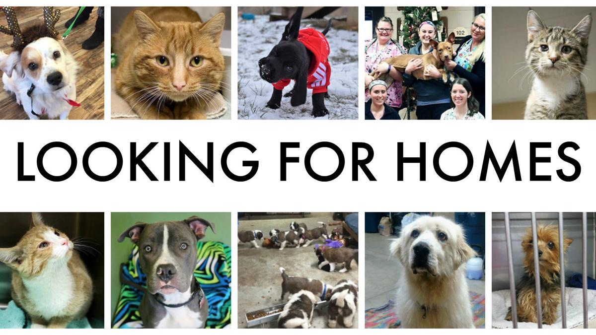 Meet some of the pets looking for forever homes in Wisconsin animal shelters