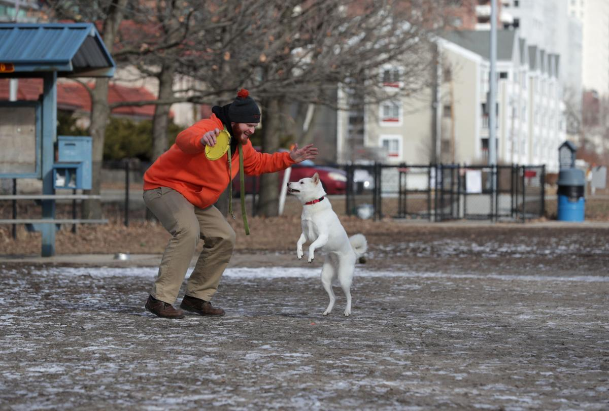 Brittingham jumping dog
