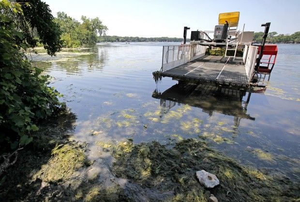 Weeds and algae in Madison lakes