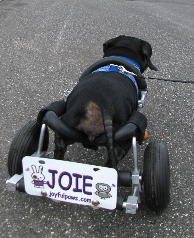 how to make a dog wheelchair for small dog