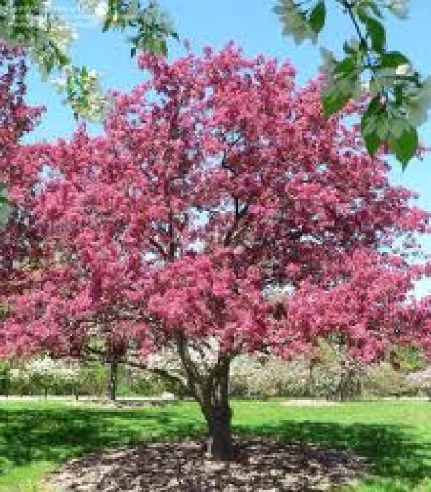 Used Cars For Sale Madison Wi >> Event : Arboretum Longenecker Horticultural Gardens Tour ...