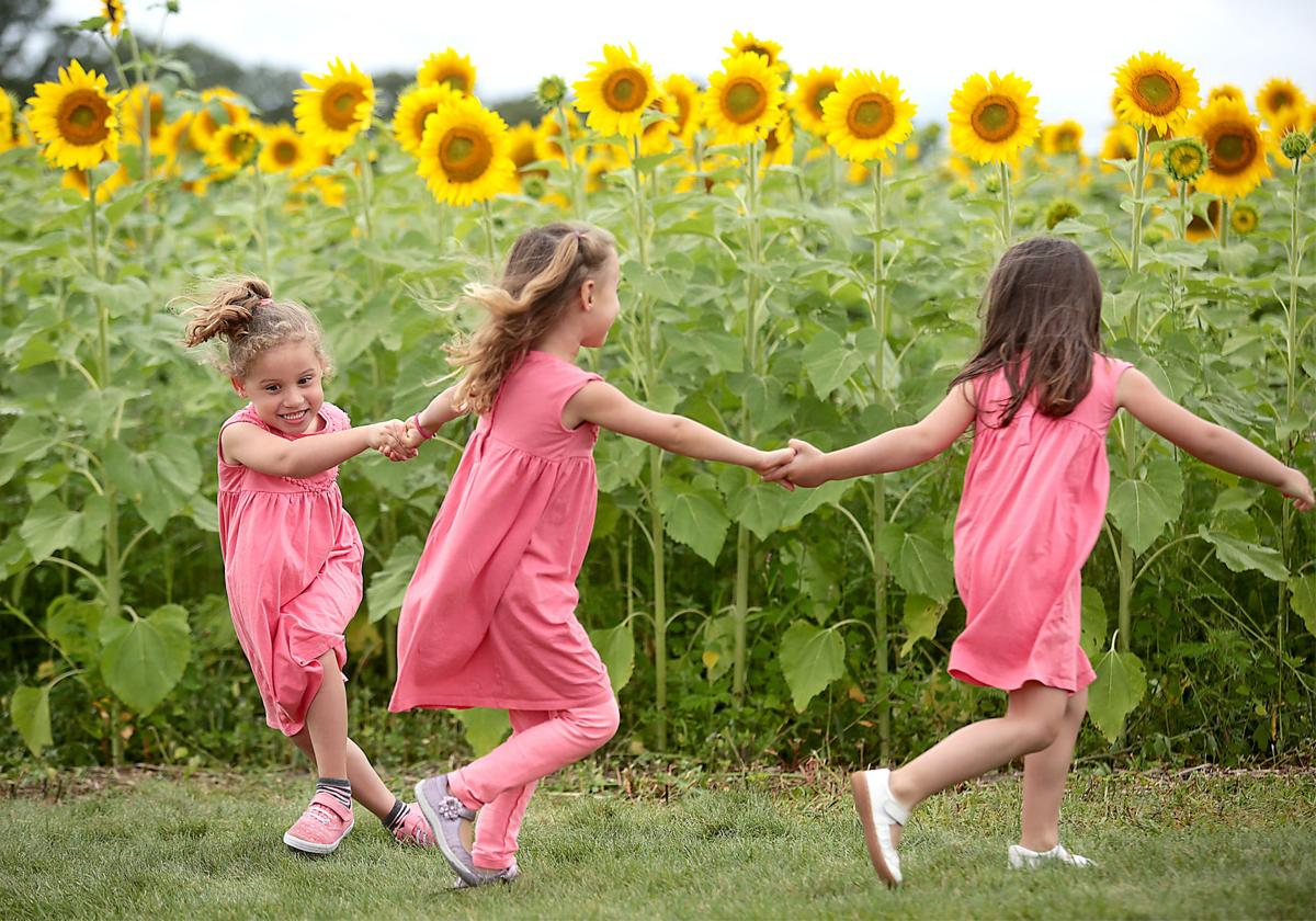Pope Sunflowers 01-08112017162218