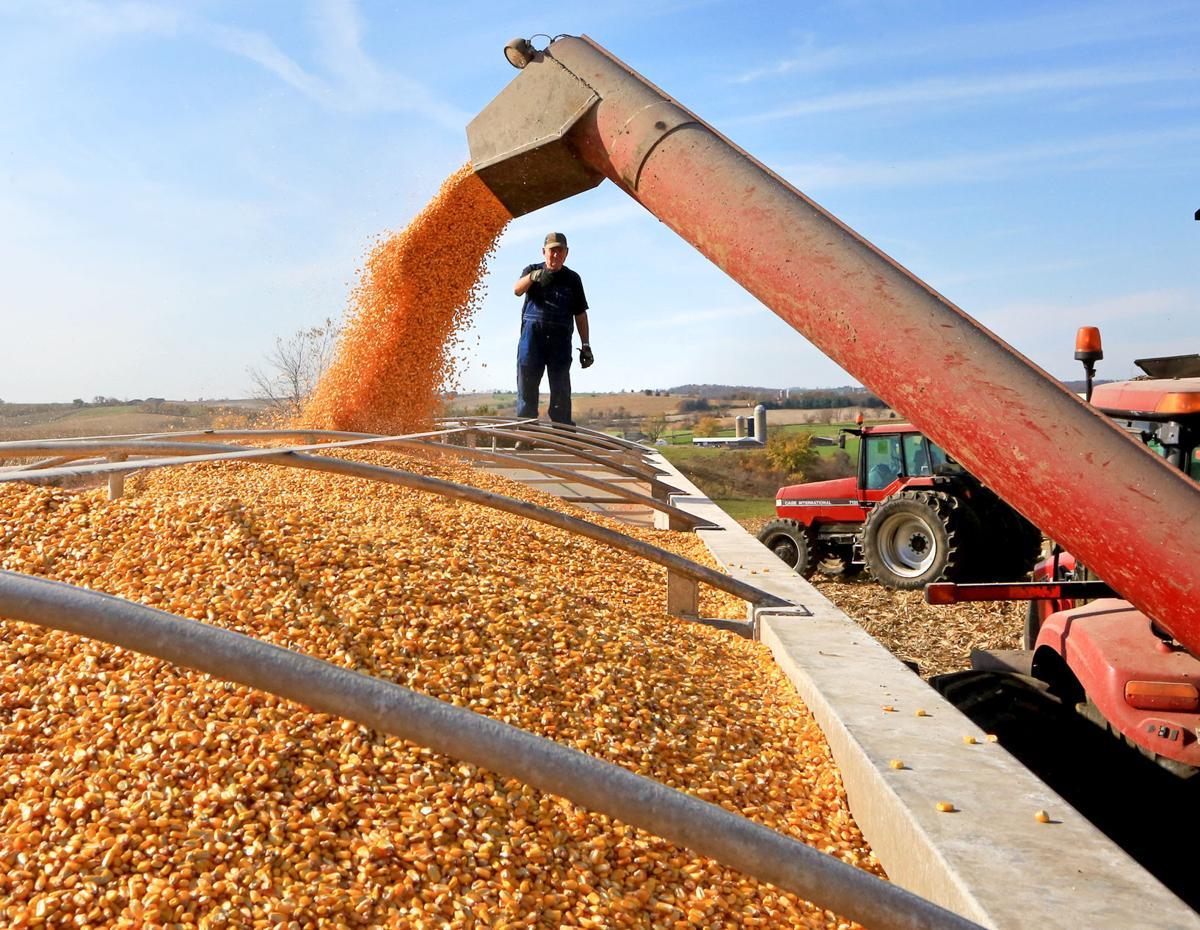 harvest 2020x1269px 581 82 - photo #6