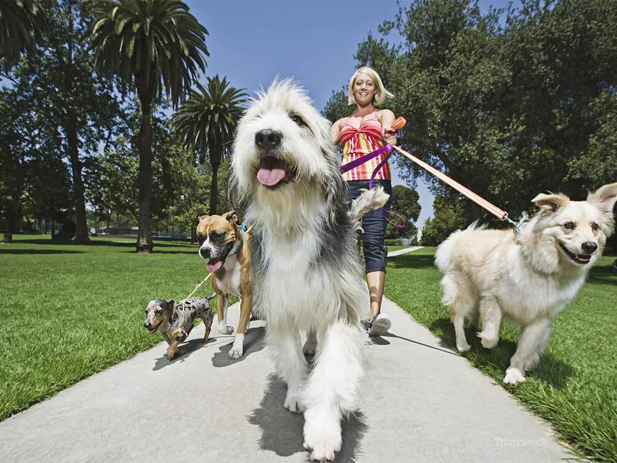 How to Become a Professional Dog Sitter
