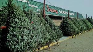 Jung Garden Center Christmas trees+Storefront.jpg