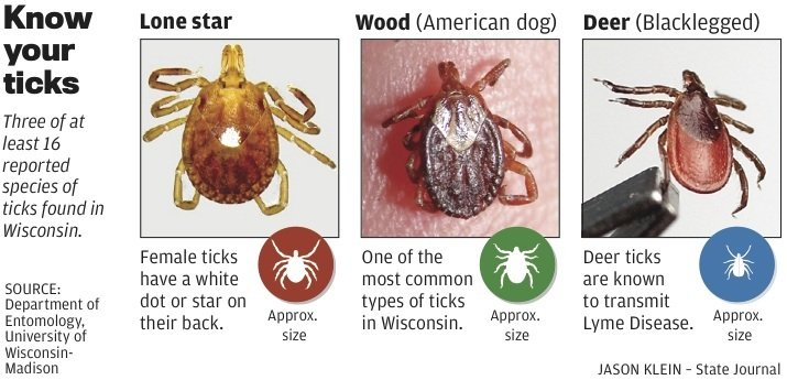 How Can You Tell If Dog Has Lyme Disease