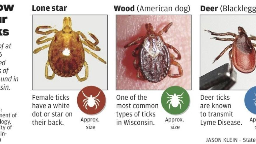 Ticks carry more than Lyme disease to Wisconsin back yards ...
