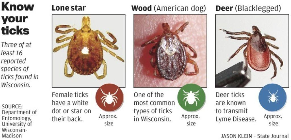 Ticks Carry More Than Lyme Disease To Wisconsin Back Yards