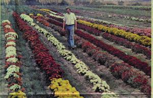 Jung seed  president vintage.jpg