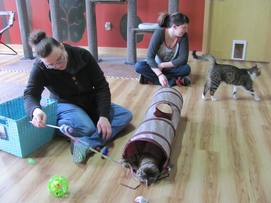 Cat Cafe opens: You've CAT to be kitten me