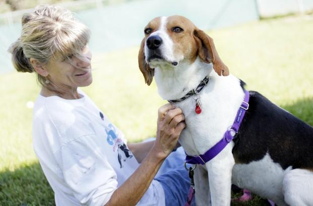 Jambo at Dane County Humane Society